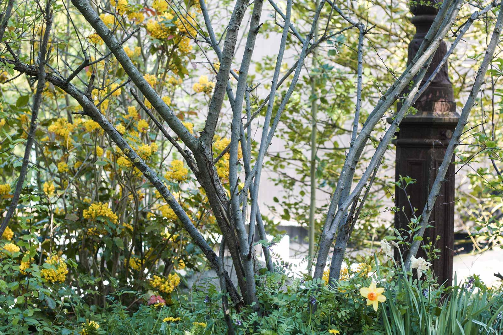 Der Garten im Mai - Was jetzt zu tun ist