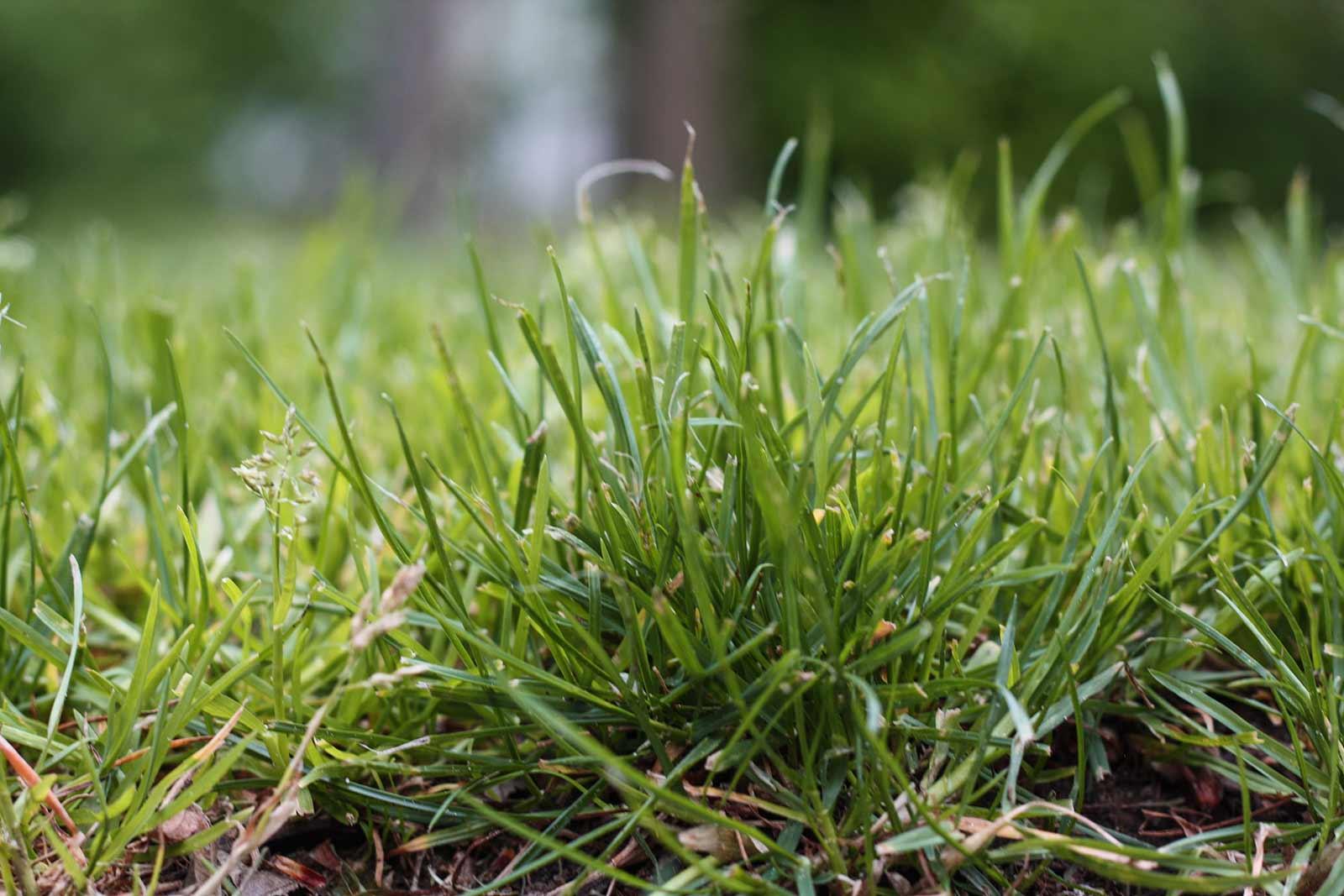 Der Garten im Mai - Rasen