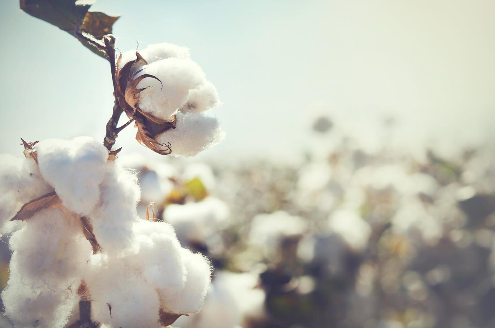 Baumwolle - Pflegetipps